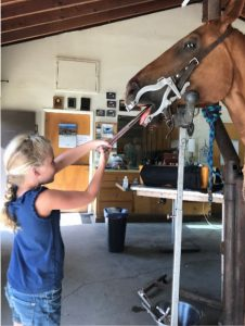 Equine Dentistry FAQ in Los Osos, CA | Large Animal Practice